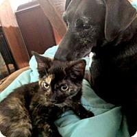 Adopt A Pet :: Star - Oak Ridge, TN