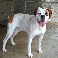 Adopt A Pet :: Slash - Ruidoso, NM