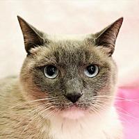 Adopt A Pet :: Bamboo - Evanston, IL