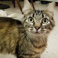 Adopt A Pet :: Lana - Elyria, OH