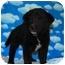 Photo 4 - Border Collie/Collie Mix Puppy for adoption in Broomfield, Colorado - Donatello