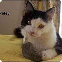 Adopt A Pet :: Petey - Portland, OR