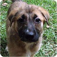 Adopt A Pet :: Mocha - Pike Road, AL