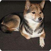 Adopt A Pet :: Cali (Nebraska) - Round Lake, IL