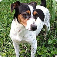 Adopt A Pet :: Rayne - Harrah, OK
