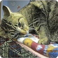 Adopt A Pet :: Sasquatch (likes football) - Sterling Hgts, MI
