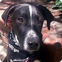 Adopt A Pet :: Linus - VIDEO (CourtesyListg) - Monrovia, CA