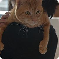 Adopt A Pet :: Leonardo - Brooklyn, NY
