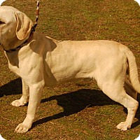 Adopt A Pet :: Ryder - Manning, SC