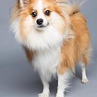 Adopt A Pet :: Brinkley - Columbia, SC