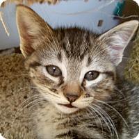 Adopt A Pet :: OANA - Medford, WI