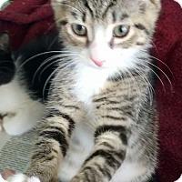 Adopt A Pet :: Aidan - Island Park, NY