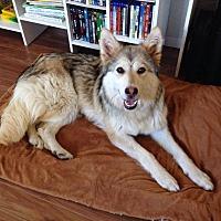 Adopt A Pet :: Demi - Regina, SK