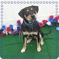 Adopt A Pet :: HUCK - Marietta, GA