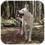 Photo 2 - German Shepherd Dog Dog for adoption in Wayland, Massachusetts - Maggie