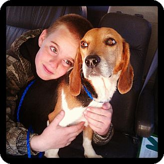 Beagle Mix Dog for adoption in Alexandria, Virginia - Dixie