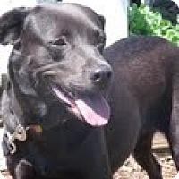 Adopt A Pet :: Josie - Lewisville, IN