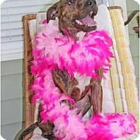 Adopt A Pet :: Mercy - Lutz, FL