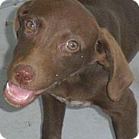 Adopt A Pet :: Cocoa - South Jersey, NJ
