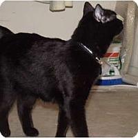Adopt A Pet :: child- or dog-like Natiri - Scottsdale, AZ