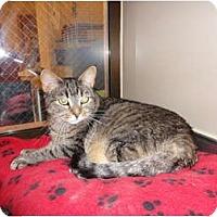 Adopt A Pet :: Morris - Kingston, WA