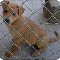 Adopt A Pet :: Palowunu - Fowler, CA