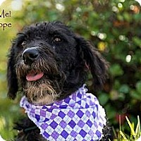 Adopt A Pet :: Hope - Henderson, NC