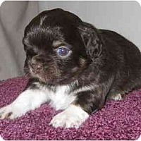 Adopt A Pet :: Jolly - Chandler, IN