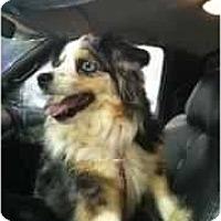 Adopt A Pet :: Darla - Mesquite, TX