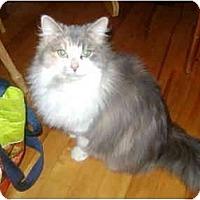 Adopt A Pet :: Laura - Montreal, QC