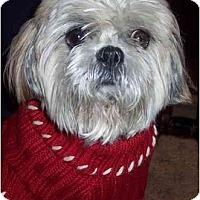 Adopt A Pet :: Bennie - Mays Landing, NJ
