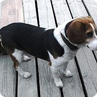 Adopt A Pet :: J J - Evergreen Park, IL
