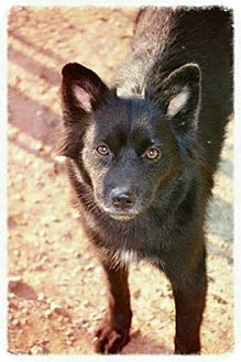 Border Collie Mix Dog for adoption in Oxford, Connecticut - Inca