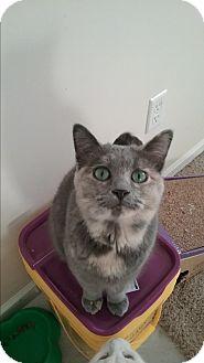 Calico Cat for adoption in Cedar Springs, Michigan - Cupcake