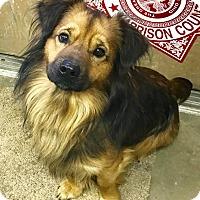 Adopt A Pet :: OZ - Cadiz, OH