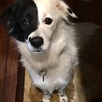 Adopt A Pet :: Phoebe - Allen, TX