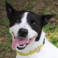 Adopt A Pet :: MAGGIE MAE - Carrollton, TX