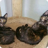 Adopt A Pet :: Twin sisters - Murdock, FL
