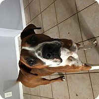 Adopt A Pet :: Kumba - Olympia, WA
