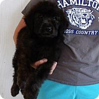 Adopt A Pet :: BOOMER - Corona, CA