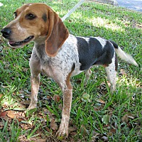 Adopt A Pet :: Macie - Palm Bay, FL