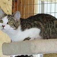 Adopt A Pet :: Tinkerbelle - Monterey, VA