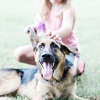 Adopt A Pet :: Walker $400 - Seneca, SC