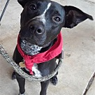 Adopt A Pet :: Merry