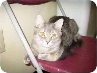 Domestic Mediumhair Cat for adoption in Pickering, Ontario - Beau
