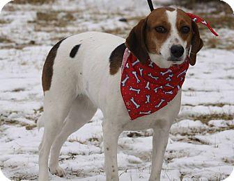 Beagle Mix Dog for adoption in Brattleboro, Vermont - Faith