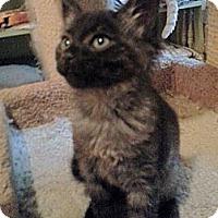 Adopt A Pet :: Marsha - Atlanta, GA