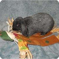 Adopt A Pet :: Sinbad - Roseville, CA