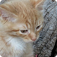 Adopt A Pet :: ledoux (ladoo) - Clearfield, UT