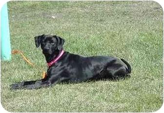 Terrier (Unknown Type, Medium) Mix Dog for adoption in Austin, Minnesota - Tweak